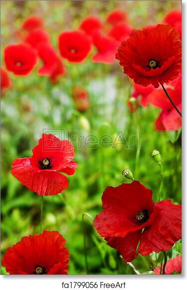 Free art print of poppies poppy flowers remembrance day free art print of poppies poppy flowers remembrance day freeart fa1799056 mightylinksfo