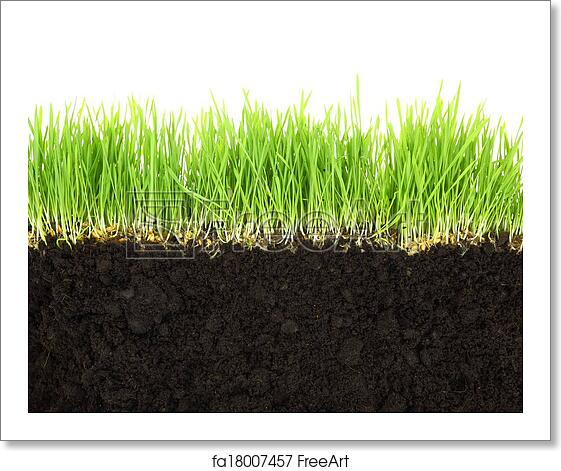Free Art Print Of Cross-section Of Soil And Grass Isolated