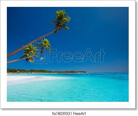 Deserted Island Beach: Free Art Print Of Few Palms On Deserted Beach Of Tropical