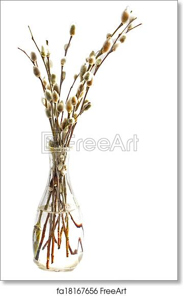 Free Art Print Of Branches Of The Pussy Willow Branches Of The
