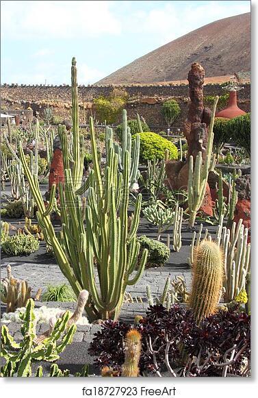 Free Art Print Of El Jardin Del Cactus Lanzarote By Cesar Manrique