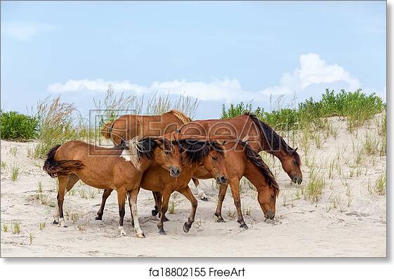free art print of assateague wild ponies on the beach a group of