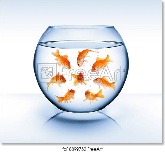 Goldfish Poster 11x14 Screen Print