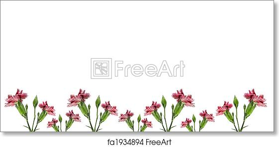 Free Art Print Of Mothers Day Carnation Pink Flowers Background