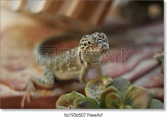 Free Art Print Of Small Lizard In A Terrarium A Small Yellow Brown