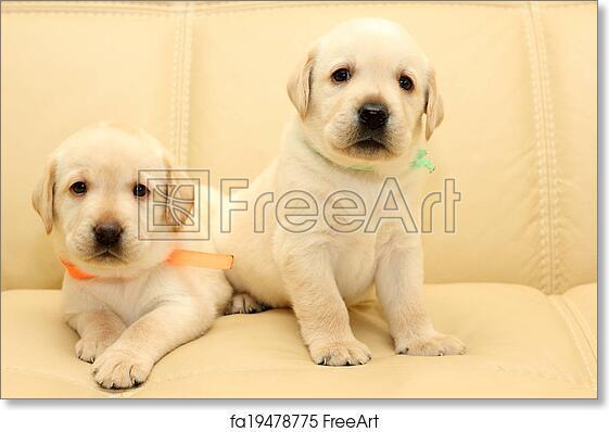 Free Art Print Of Labrador Puppies Group Of Adorable Labrador