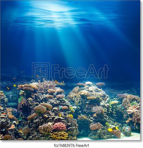 Coral Reef Background: Free Art Print Of Sea Or Ocean Underwater Coral Reef