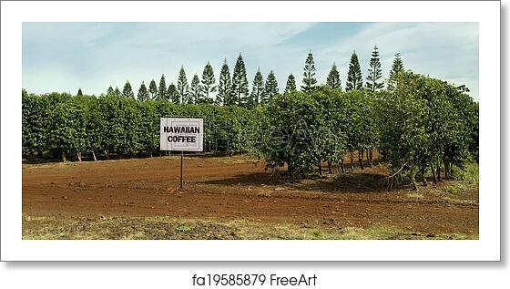 Free art print of Hawaiian Coffee Farm