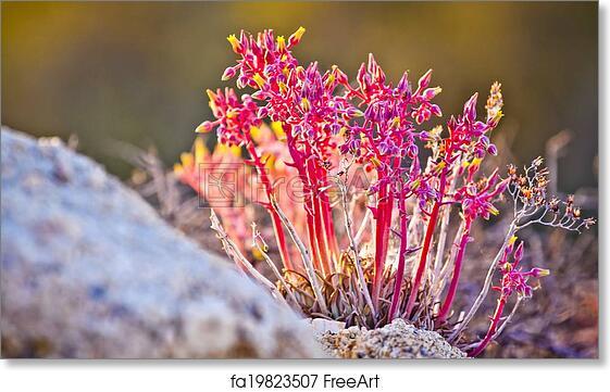 Free art print of pink and yellow desert flowers freeart fa19823507 free art print of pink and yellow desert flowers mightylinksfo