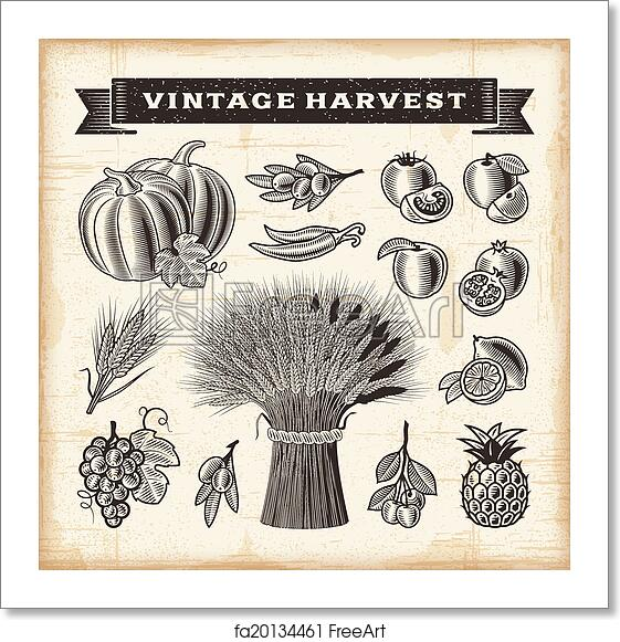 Free art print of Vintage harvest set. A set of fully editable vintage  fruits and vegetables in woodcut style. EPS10 vector illustration. |  FreeArt | fa20134461