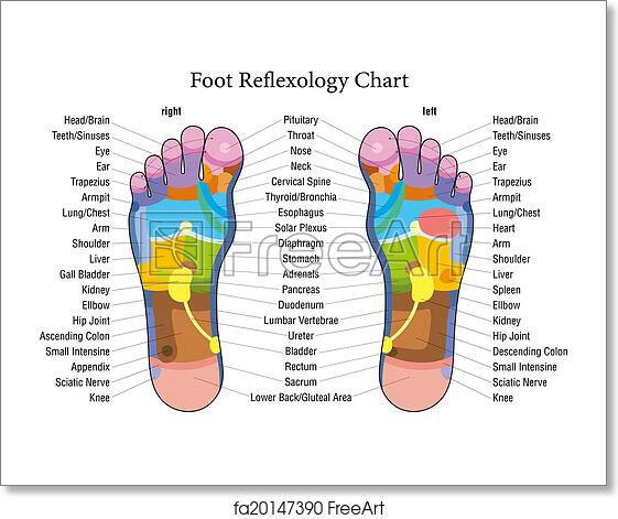 Free art print of foot reflexology chart description foot foot reflexology chart with accurate description of the corresponding internal organs and body parts vector illustration over white background ccuart Image collections