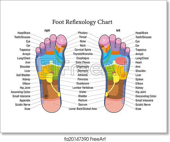 Free Art Print Of Foot Reflexology Chart Description
