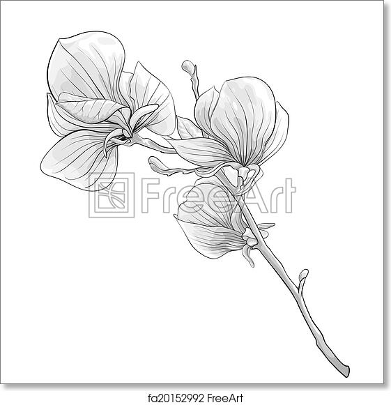 Free Art Print Of Beautiful Monochrome Black And White Twig
