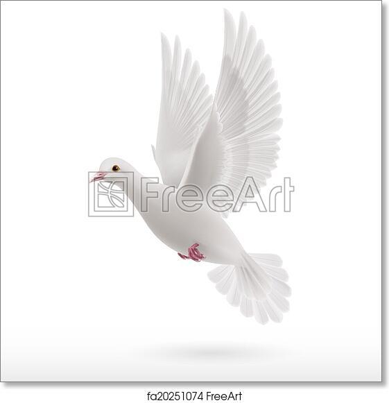 Free Art Print Of White Dove Realistic White Dove Flying On White