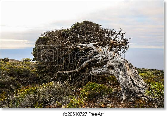Juniper Root User