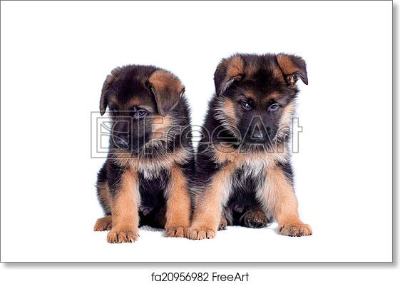 Free Art Print Of Two German Shepherd Puppies Two German Shepherd