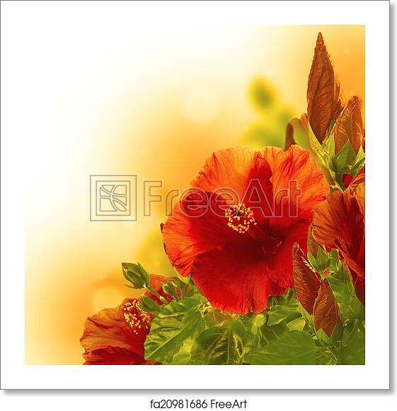 free art print of bunch of red hibiscus flower backgr bunch of red