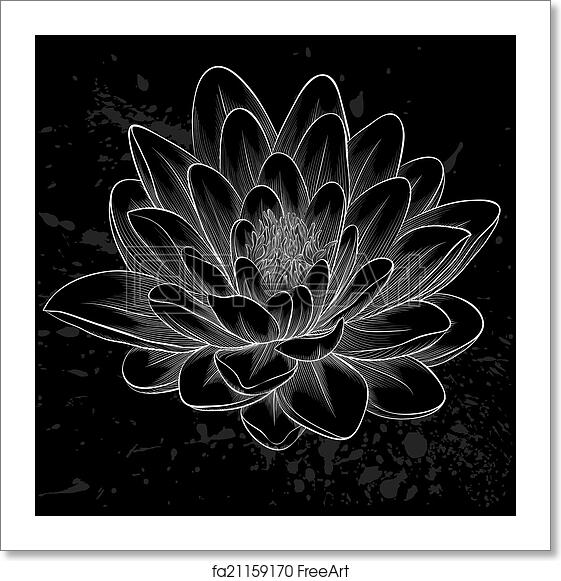 Free Art Print Of Black And White Lotus Flower Painted In Graphic Style Isolated