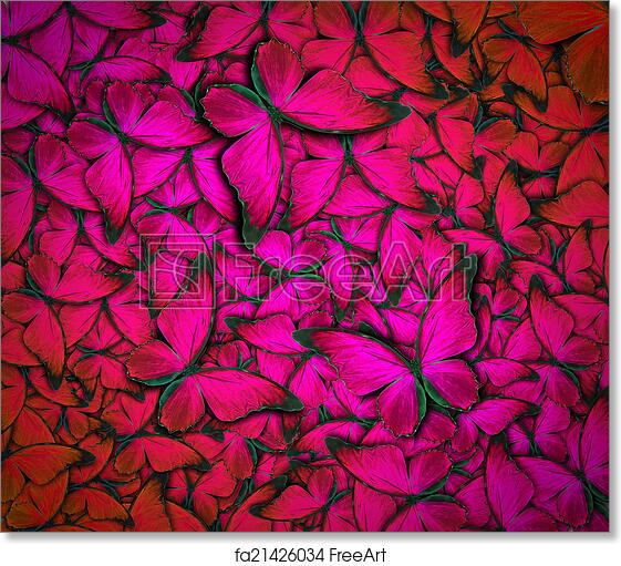 Free Art Print Of Beautiful Butterfly Background