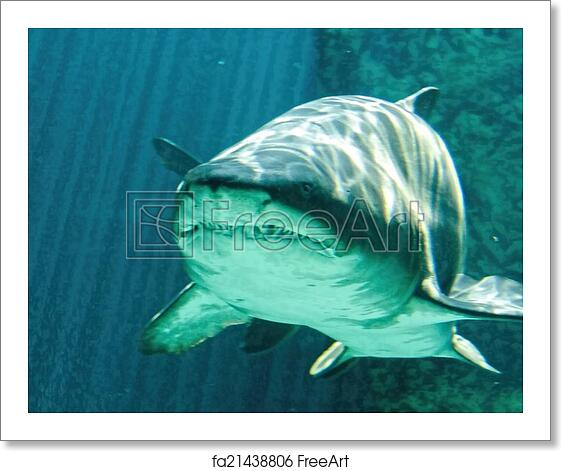 Free art print of Dangerous bull shark jaw huge