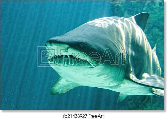 Free art print of Dangerous bull shark jaw huge | FreeArt | fa21438927