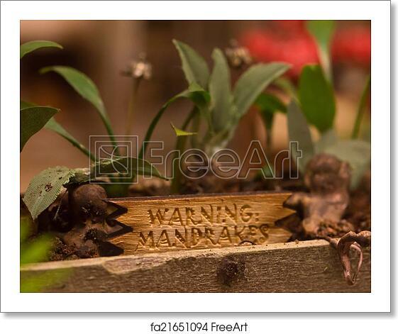 Free Art Print Of Mandrake Plants From Harry Potter Mandrake