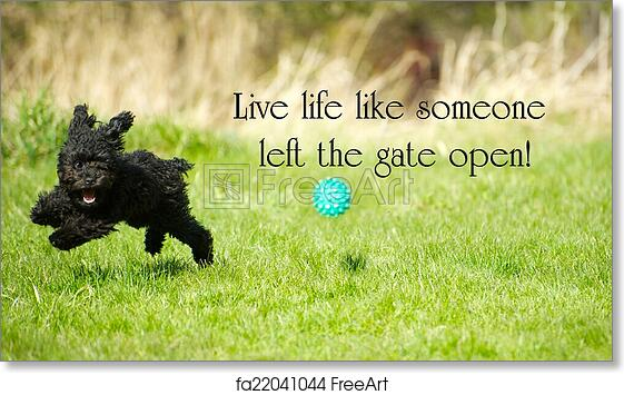 "Free art print of Inspirational words ""Live life like someone left the gate open"" with an adorable toy poodle enjoying life to the fullest, happily ripping around in the summer."