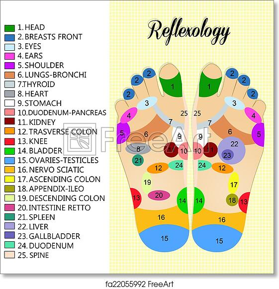 picture relating to Printable Reflexology Foot Chart known as No cost artwork print of Foot reflexology chart