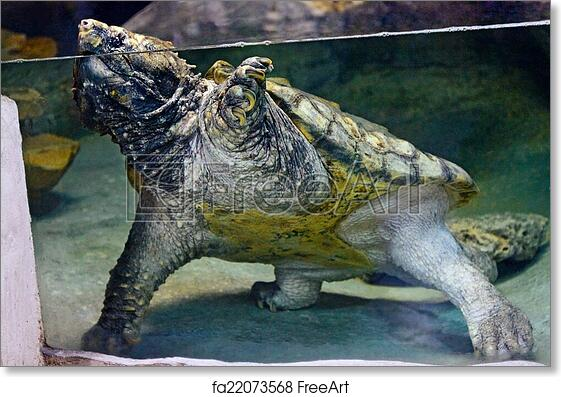 Free art print of Large huge turtle in water
