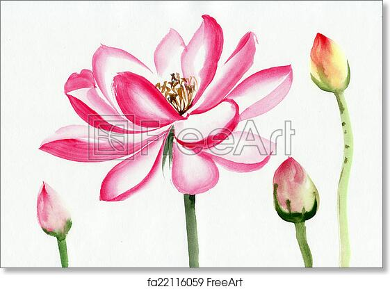 Free Art Print Of Lotus Flower Watercolor Painting Lotus Flower