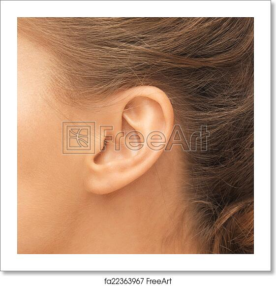 Free art print of Close up of woman's ear