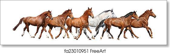 Free Art Print Of Herd Of Wild Horses Running Free On White