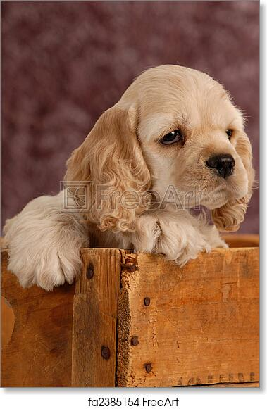 free art print of american cocker spaniel puppy with in a wooden box