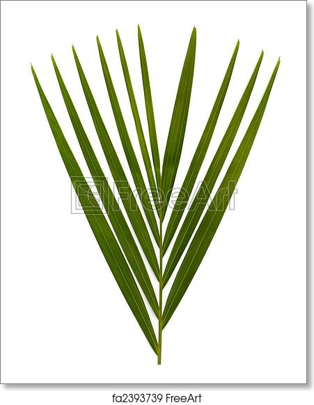 Free Art Print Of Palm Leafs On White Green Leaves On A White Background For Use As Design Elements Freeart Fa2393739