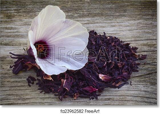 Free Art Print Of Hibiscus Tea Hibiscus Sabdariffa Flower And
