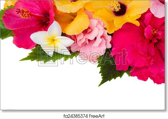 Free Art Print Of Border Of Colorful Hibiscus Flowers Border Of