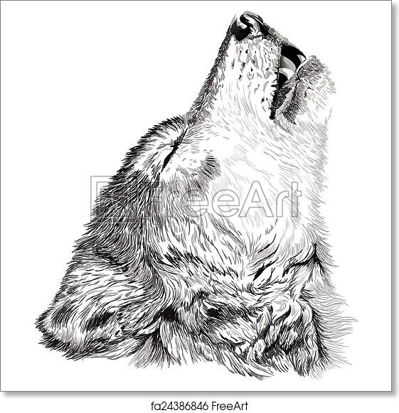 c9d6b0605 Free art print of Wolf howls sketch. Vector portrait of angry wolf face |  FreeArt | fa24386846