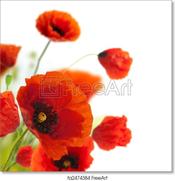 picture relating to Poppies Printable known as Totally free artwork print of Floral style and design, decoration bouquets, poppies border - corner