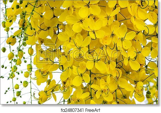 Golden shower images