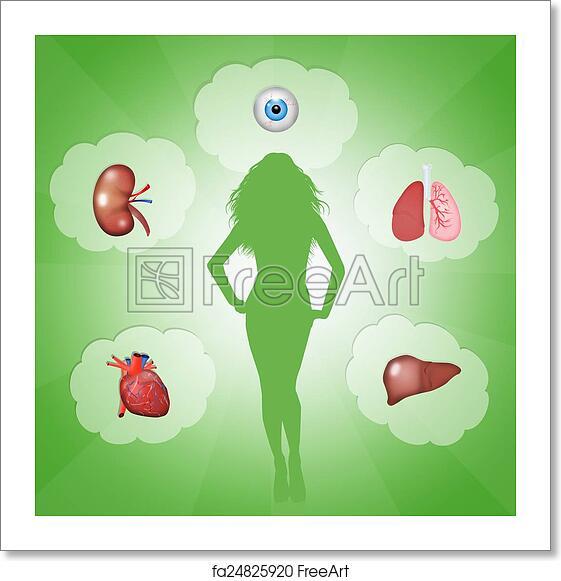 Free Art Print Of Organ Donation Illustration Of Organ Donation Freeart Fa24825920