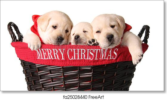 Free Art Print Of Christmas Puppies Three Yellow Lab Puppies In A