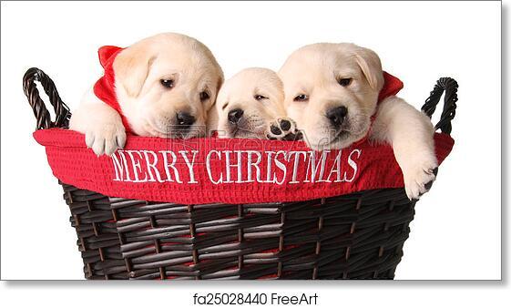 Christmas Puppies.Free Art Print Of Christmas Puppies