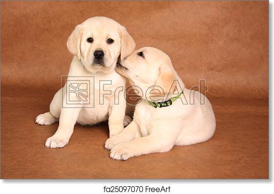 Free Art Print Of Labrador Puppies Cute Labrador Puppies Snuggling