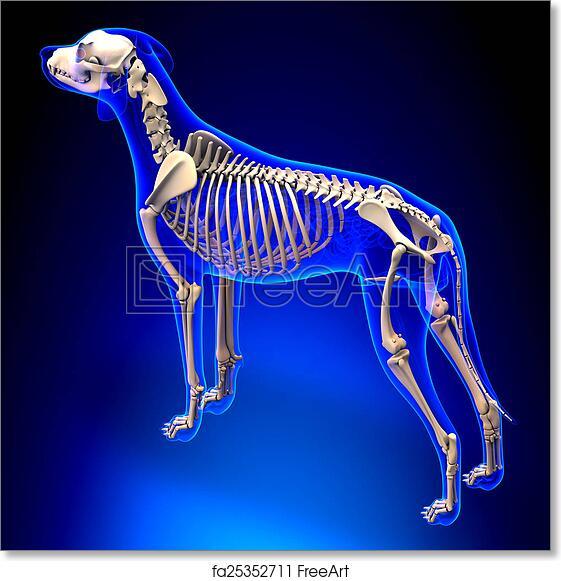 Free Art Print Of Dog Skeleton Canis Lupus Familiaris