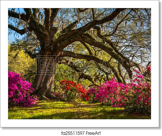 Free art print of Spring Flowers Bloom at Charleston South Carolina Plantation