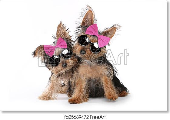 Free Art Print Of Yorkshire Terrier Puppies Dressed Up In Pink Cute