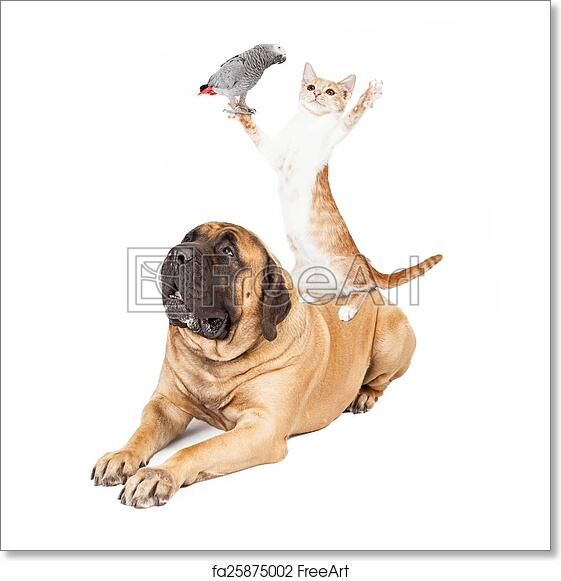Collage Cats And Dogs Breed Cute Kitten Two Set 16x20 Kids Room Wall Decor Print