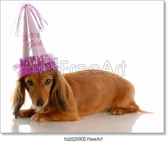 Free Art Print Of Miniature Long Haired Dachshund Dog Wearing Birthday Girl Hat