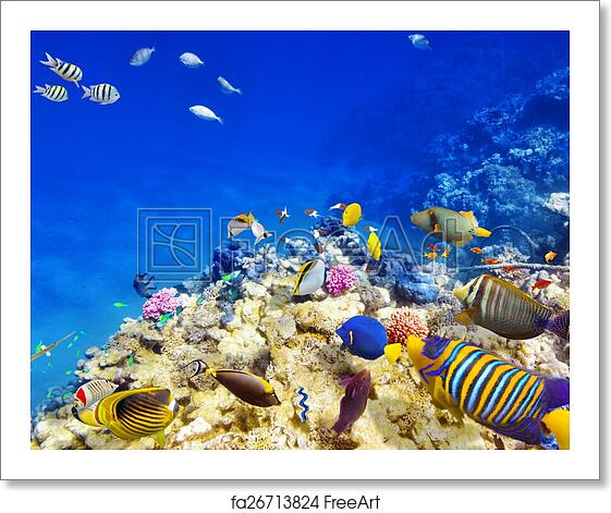 Free Art Print Of Underwater World With Corals And Tropical Fish