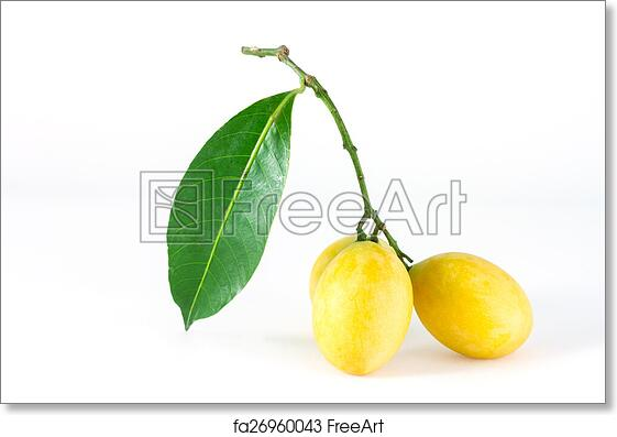 popular in Thailand 10 seeds of Bouea macrophylla Griff Seasonal fruits